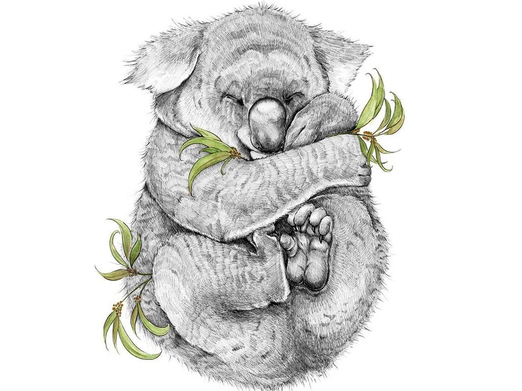 sss_emma_koala