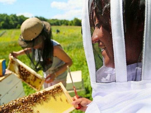 Beekeeping Workshop at Bee Sustainable (Photo Credit to Star Tribune)