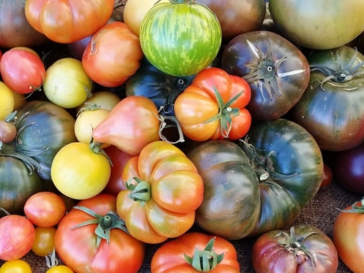 Preserving Know-How: Savoury Ways with Tomatoes at My Green Garden